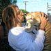 Bradley Cooper 2011 júniusában rasztaparókában egy tigriskölyköt csókolgat