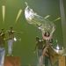 Eurovíziós Dalfesztivál 2012 - Franciaország - Anggun - Echo (You and I)