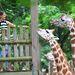 2012. július 28. - Bronx Zoo