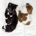 Kitty-t egy járókelő vitte be egynaposan, Buttons, a Jack Russell-terrier pedig már a menhelyen született.
