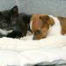 Együtt pihen Kitty és Buttons