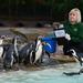 Még több pingvin