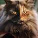 Ezt a cicát Puffynak hívják, Zoran Milutinovic fotózta. Ennél többet nem tudunk róla, de nem photoshop.