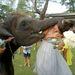 A thaiföldi esküvői malőr képkockánként