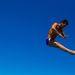 Rafael Zambaldi a levegőben