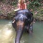 Megülte az elefántot. A dekoltázs feldobja az egzotikus látványt