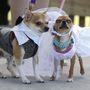 Woofstock fesztivál kutyáknak Torontóban