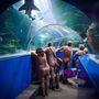 Brit naturisták stírölik a cornwalli akvárium halait.