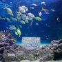 Így néz ki a kiállítás, ha megvásárol egy képet, az árából 10% a halaknak megy.