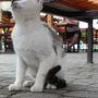 A területi macska kifejezi halfogyasztás iránti óhaját.