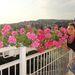 Bódi Sylvi virágokkal rogyaszt
