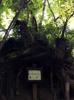 Élni akarás! -  ezt a táblát a korhadtnak tűnő, öreg fa kapta, miután új hajtása nőtt.