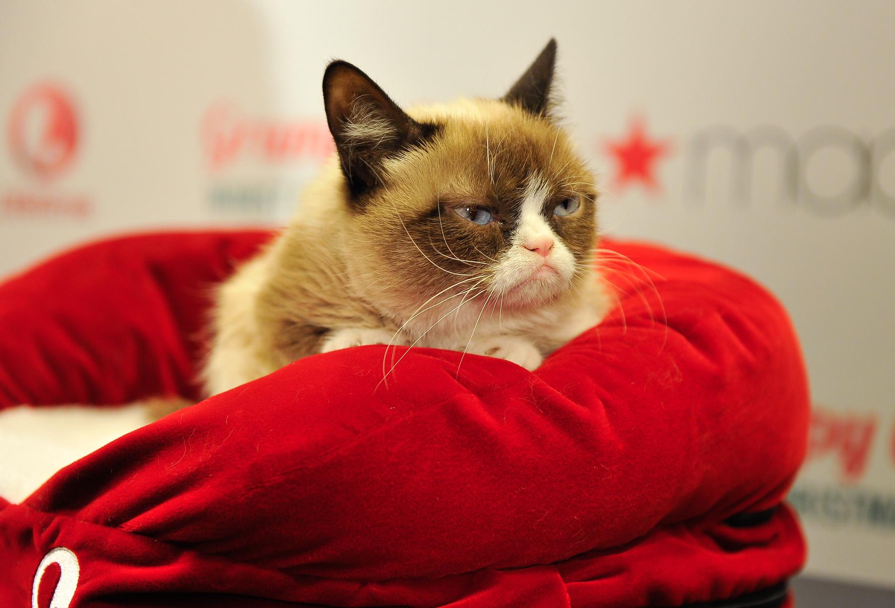 velvet grumpy cat a sajt esem nyen gal ria