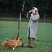 II. Erzsébet a kutyáit fotózza 1960-ban. Ezen a konkrét képen talán pont nem a kutyákat.