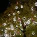 Körszimmetrikus motívumok egy fán (Fotó: BDK)