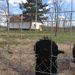 Négy kutyájuk és egy disznajuk is kint volt a kertben érkezésünkkor.