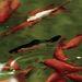 Ezek a halak is szerepeltek a sorozatban!
