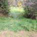 A letaposott fűről meg lehetett ismerni, hol zajlott a helyszínelés.