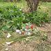 Ötven méterre az úttól virágok és gyertyák jelzik, hol találták meg a holttestet.