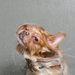 Sophie Gamand vizeskutya-fotói