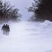A március 15-i váratlan havazás megbénította az országot.