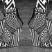 Givency minták cipőn