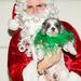 Toys for Dogs parti 2012. december 19-én - Kerry Heffernan