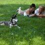 Kutya, nők!